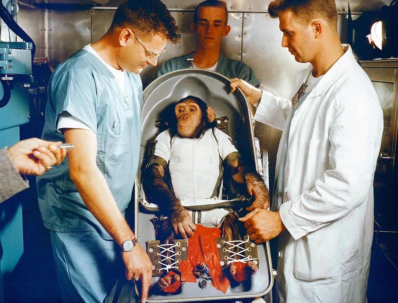 csimpanz